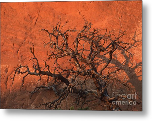 Tree In Arches Metal Print by Stan and Anne Foster