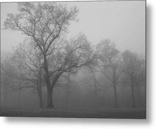 Tree In Black And White Metal Print by James Jones