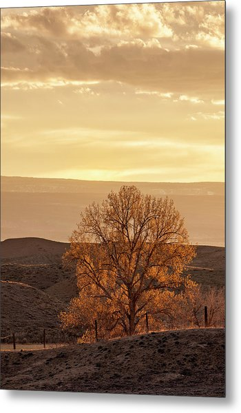 Tree In Desert At Sunset Metal Print