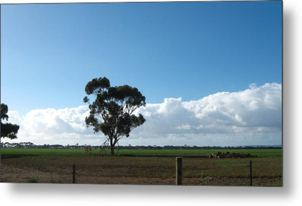 Tree In Field Metal Print