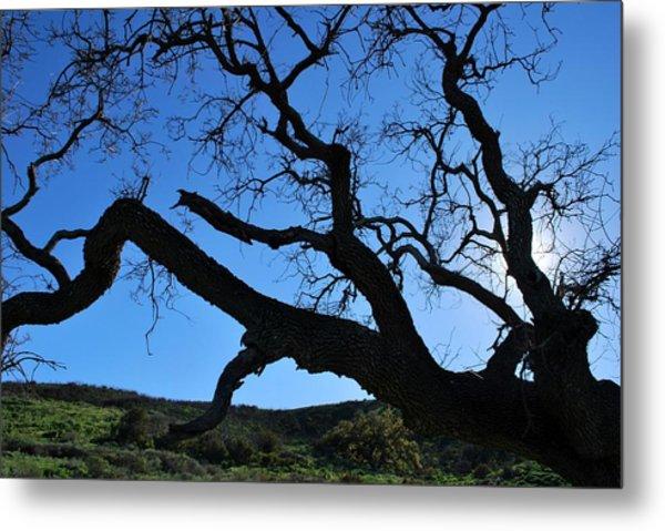 Tree In Rural Hills - Silhouette View Metal Print