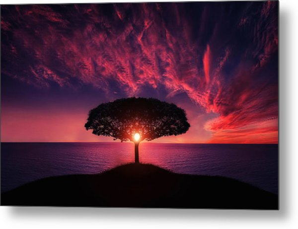 Tree In Sunset Metal Print