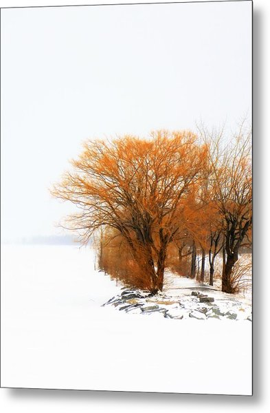Metal Print featuring the photograph Tree In The Winter by Cristina Stefan