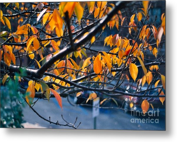 Tree In View Metal Print by Simonne Mina