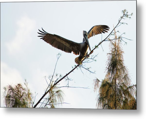 Metal Print featuring the photograph Tree Landing by David Buhler