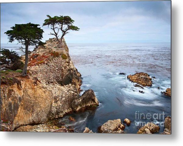 Tree Of Dreams - Lone Cypress Tree At Pebble Beach In Monterey California Metal Print