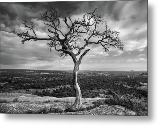 Tree On Enchanted Rock In Black And White Metal Print