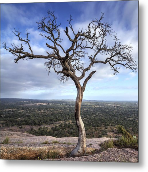 Metal Print featuring the photograph Tree On Enchanted Rock - Square by Todd Aaron