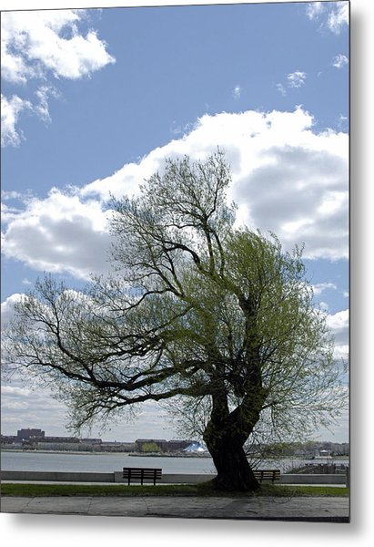 Tree On G Street South Boston Ma Metal Print
