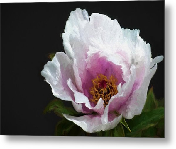 Tree Paeony I Metal Print