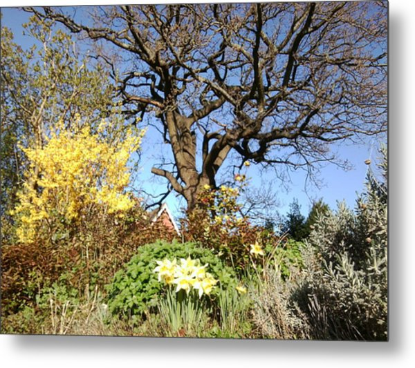 Tree Photo 991 Metal Print