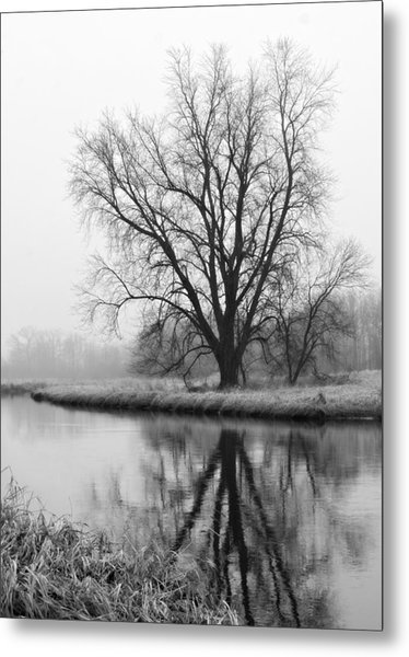 Tree Reflection In The Fox River On A Foggy Day Metal Print
