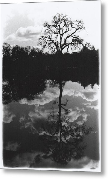 Tree Reflection Sebastopol Ca, Metal Print