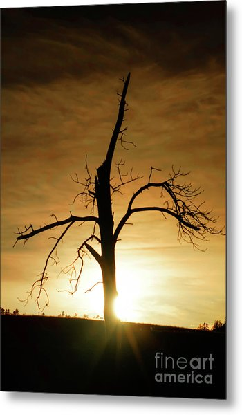 Tree Silhouette At Sundown Metal Print