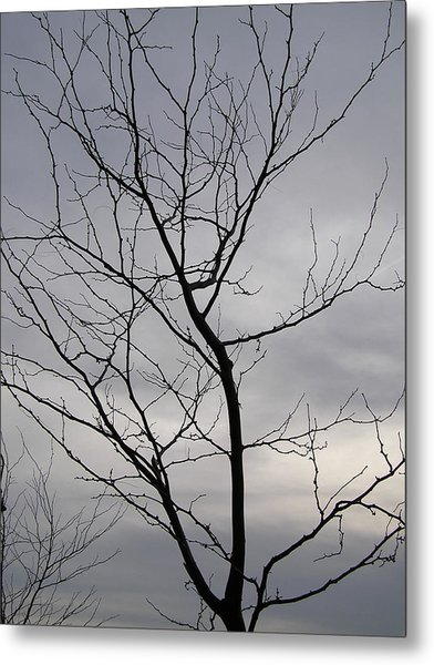 Tree Silhouette  Metal Print by Richard Mitchell