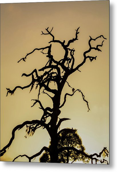 Tree Silhouette Metal Print