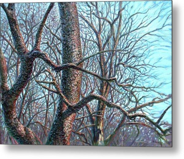 Tree Study Metal Print