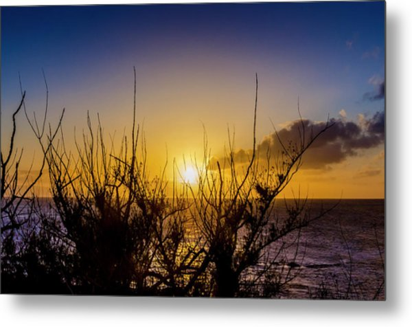 Tree Sunset Metal Print