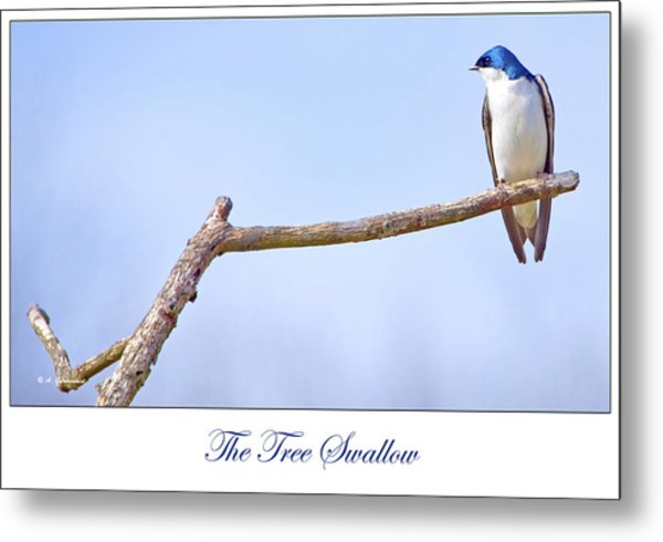 Tree Swallow On Branch Metal Print