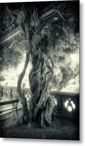 Tree Trunk Bw Series Y6693 Metal Print