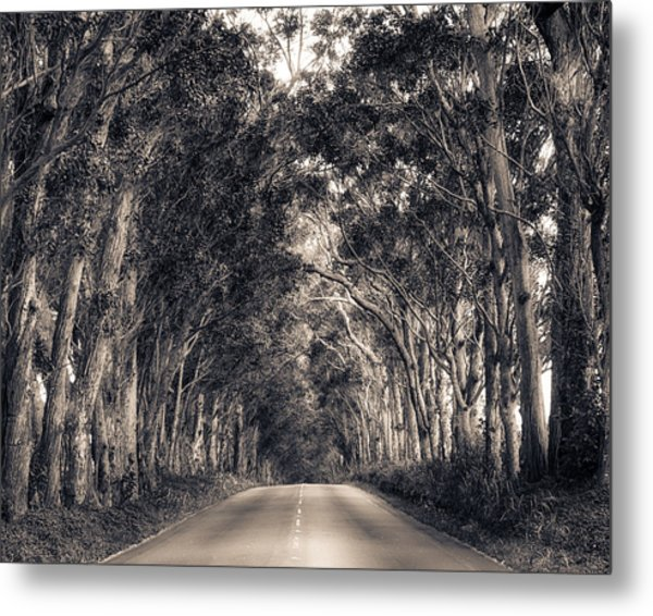 Tree Tunnel Metal Print