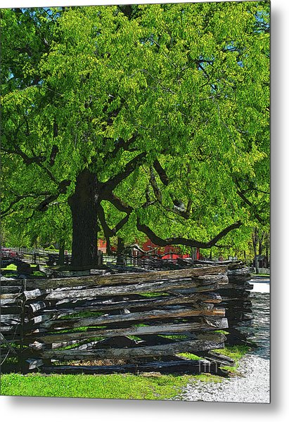 Tree With Colonial Fence Metal Print
