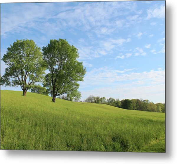 Summer Trees 3 Metal Print