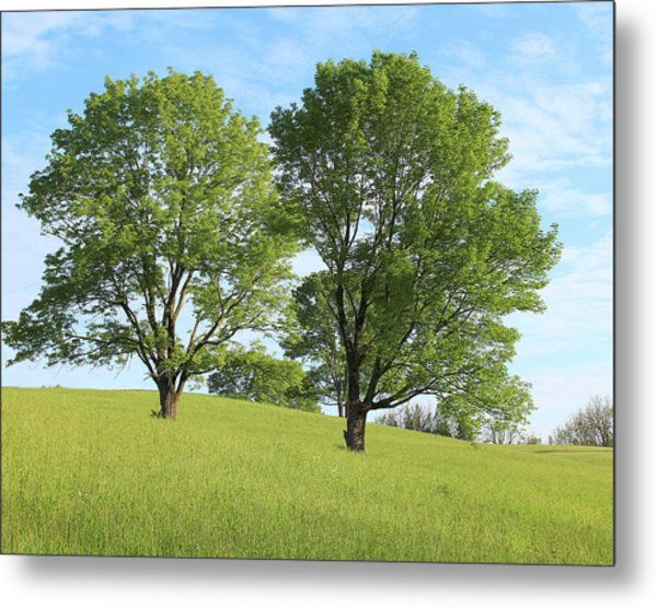 Summer Trees 4 Metal Print
