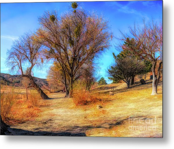 Trees Along Elizabeth Lake Metal Print