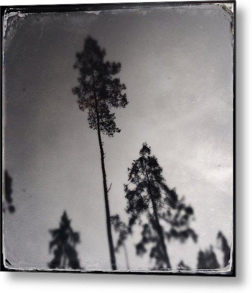 Trees Black And White Wetplate Metal Print