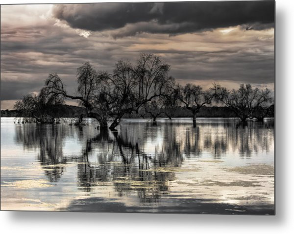 Trees Dream Metal Print