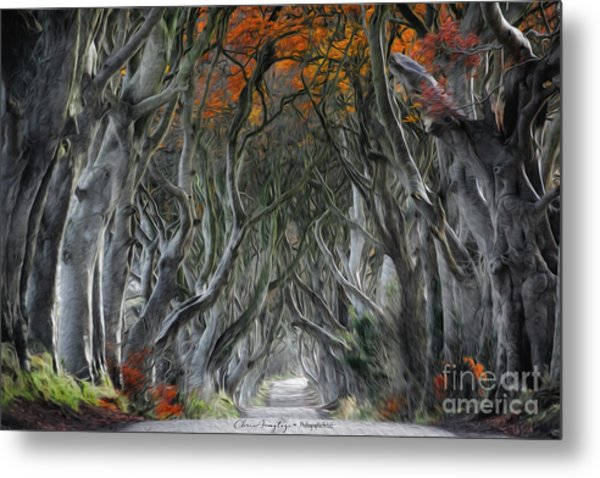 Trees Embracing Metal Print