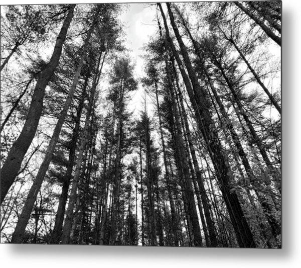 Trees Metal Print by Eric Radclyffe