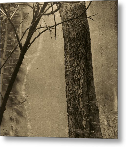 Trees Growing In Silo - Square 2015 Edition - Brown Metal Print by Tony Grider