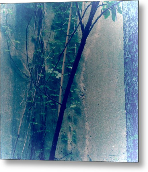 Trees Growing In Silo Abstract- Square 2015 Edition Metal Print by Tony Grider