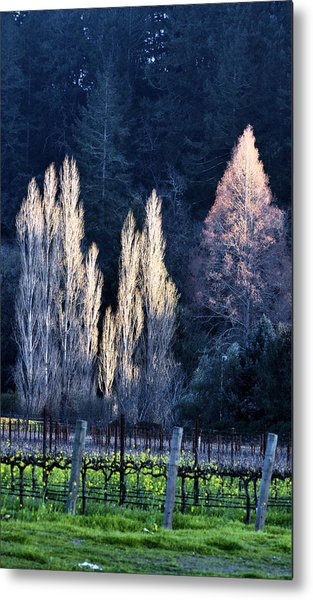 Trees In Fall Napa Valley Metal Print