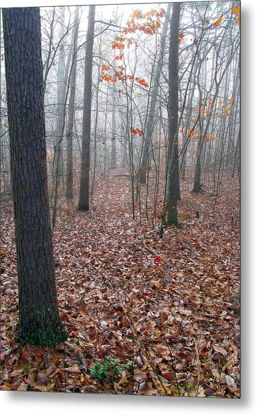 Trees In Foggy Fall Woods Metal Print by Richard Singleton