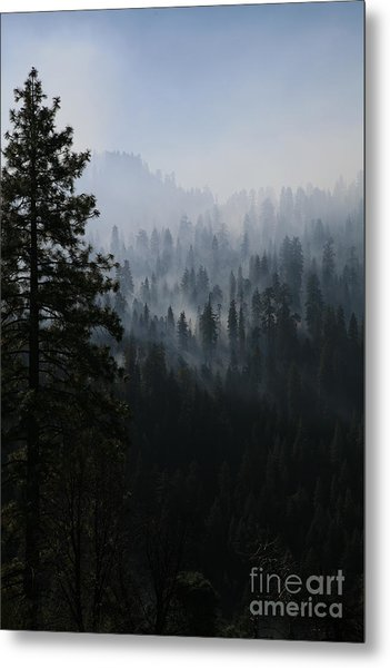 Trees In Yosemite Metal Print