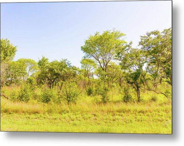 Trees In Zambia Metal Print