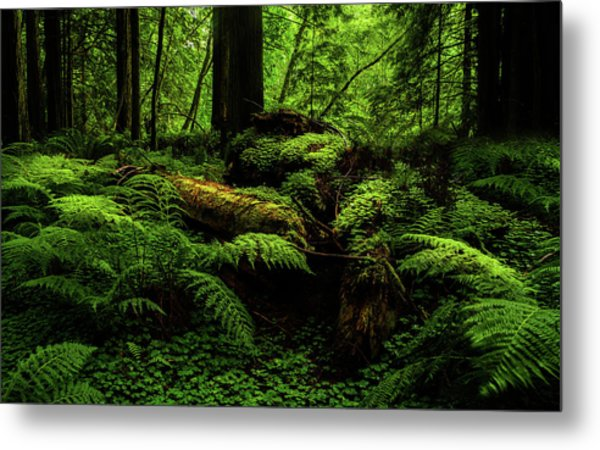 Metal Print featuring the photograph Trees Of Mystery by TL Mair