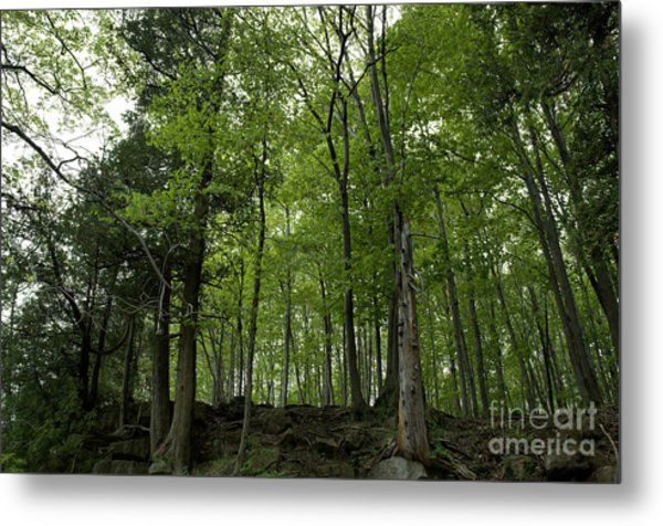 Trees On The Edge Metal Print