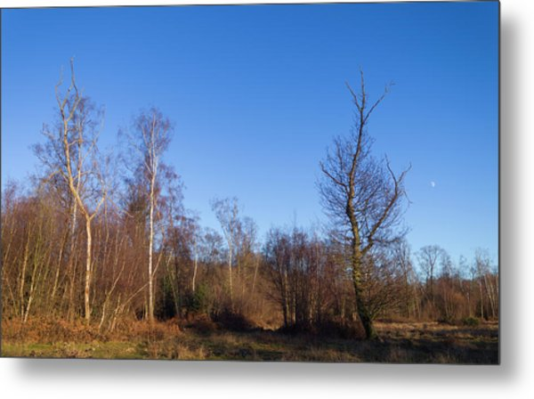 Trees With The Moon Metal Print