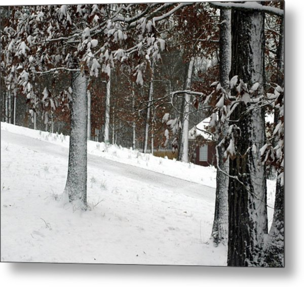 Tress Of Snow Metal Print by Lynn Reid