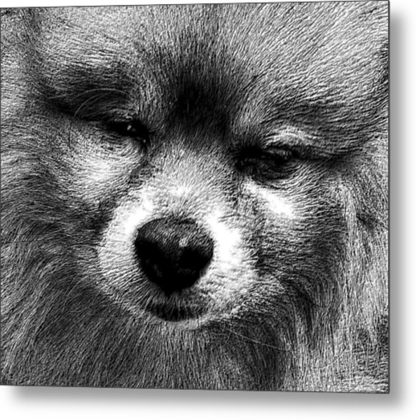 Tribute To Jojo Rip Buddy Metal Print