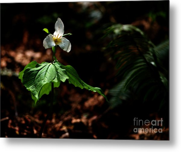 Trillium In The Woods Metal Print by Sharon Talson