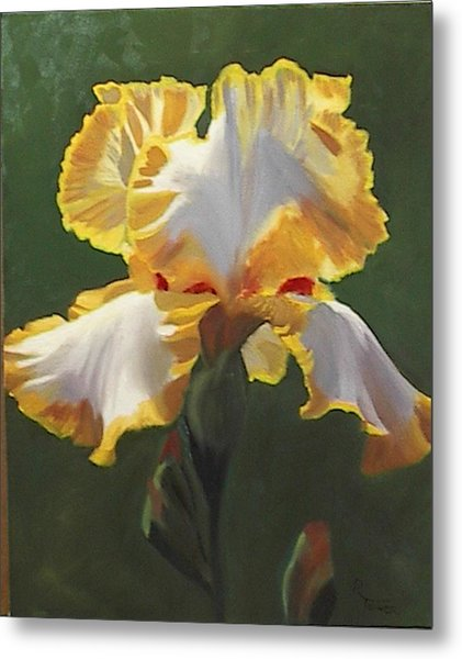 Trimmed In Yellow 1 Metal Print by Robert Tower