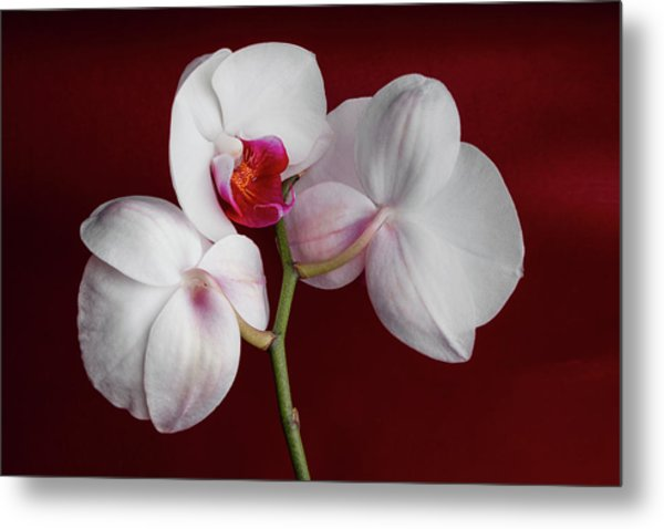 Trio Of Orchids Metal Print