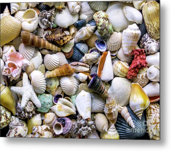 Tropical Beach Seashell Treasures 1500a Metal Print