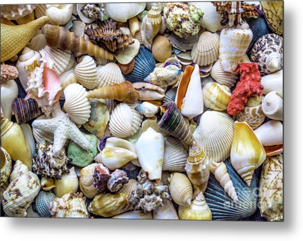 Tropical Beach Seashell Treasures 1529b Metal Print