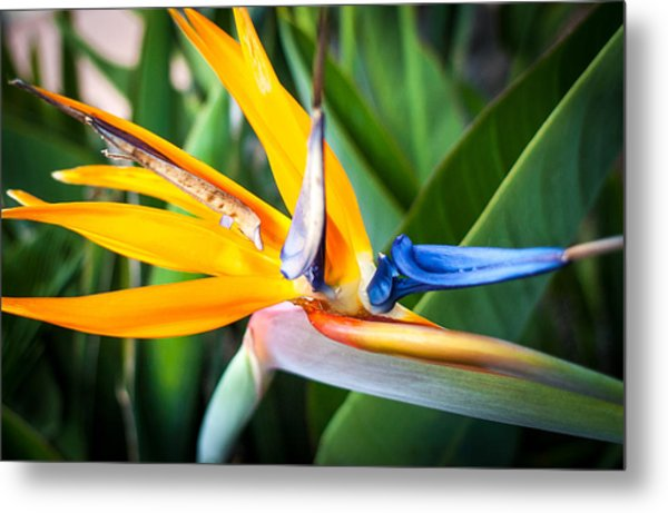 Tropical Closeup Metal Print